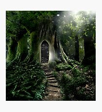 Doorway to Lothlorien Photographic Print