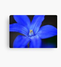Small Blue Flower Canvas Print