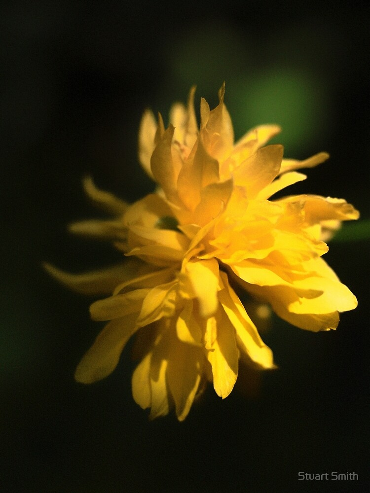 Beautiful Yellow Flower in Full Bloom by StuartImagery