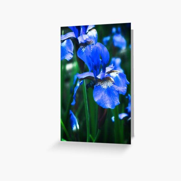 Blue Iris Flower - Art Photography Greeting Card