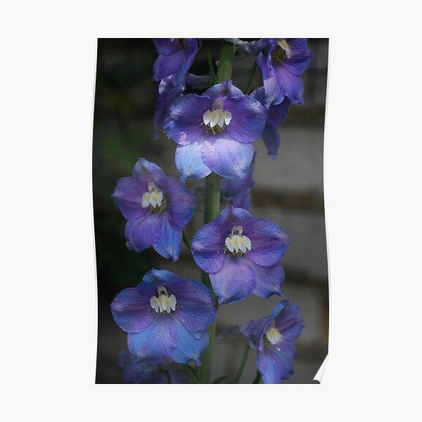 Perfect Purple Poster