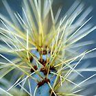 Cactus #1 by Matt Scott