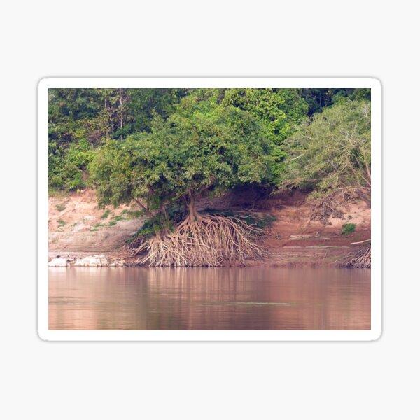 Mangrove Trees on the Mekong River Bank Laos Sticker