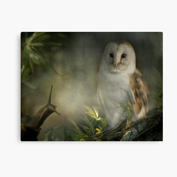 The Owl looked at Brian kindly... Canvas Print