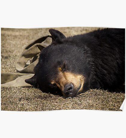 Let Sleeping Bears Lie Poster