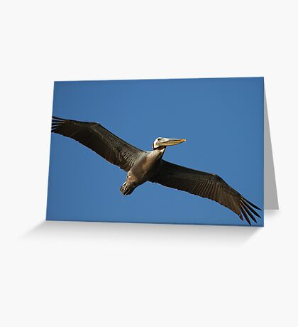 Brown Pelican In Flight Greeting Card