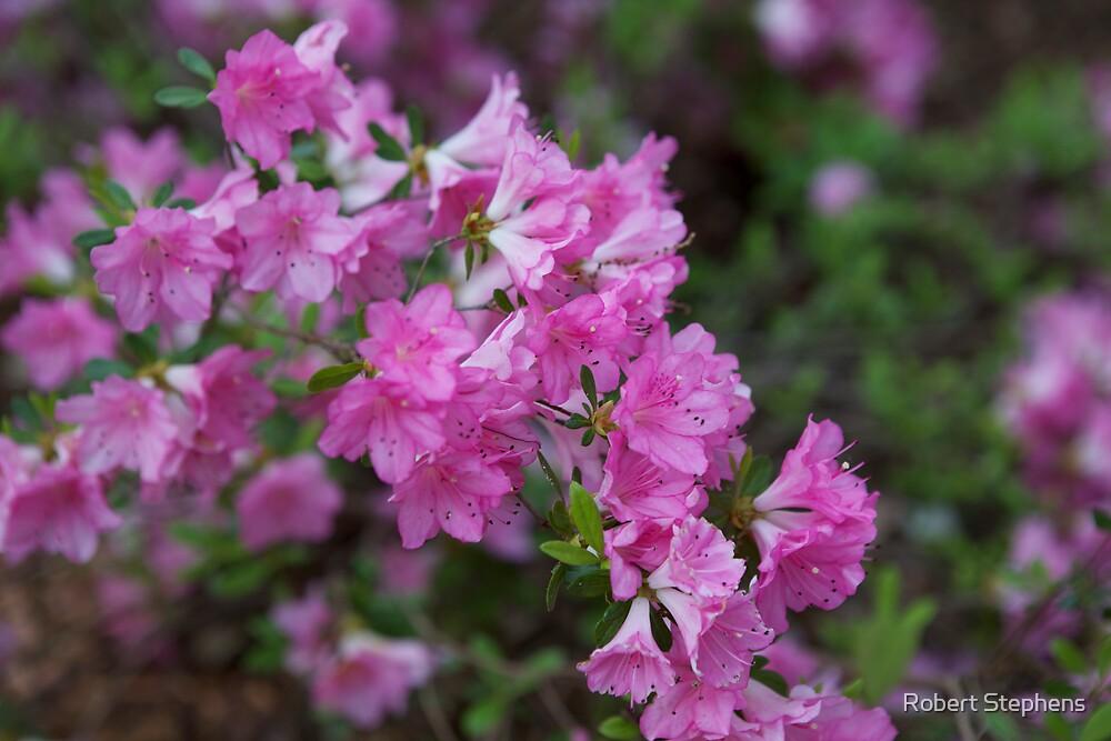 Beautiful Spring by Robert Stephens