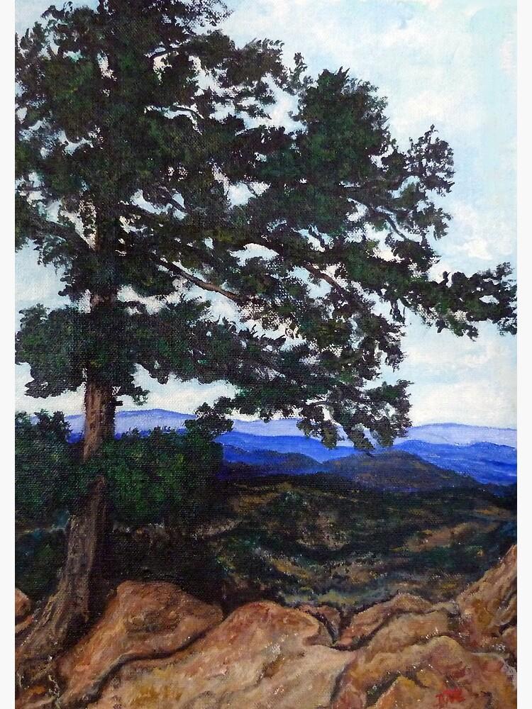 Flagstaff Mountain Tree by donnaroderick