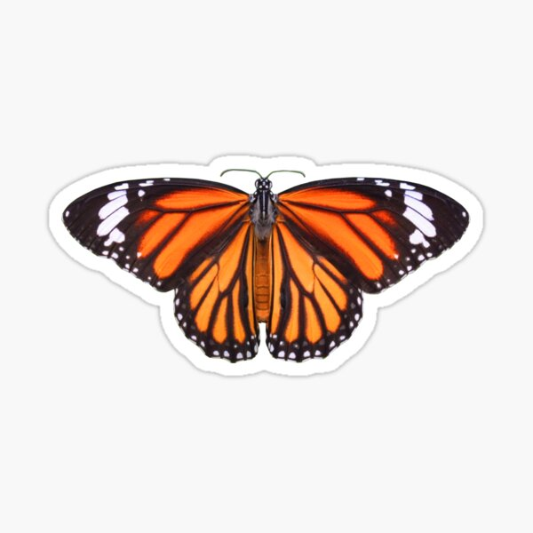 Butterfly Design - Common Tiger Butterfly Sticker