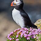 Puffin therapy by Shaun Whiteman