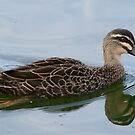 I'm Just a little Black Duck by Rick Playle