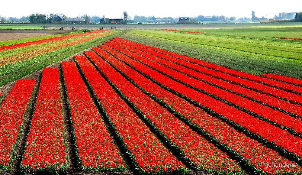 Tulip splendour 2010 by jchanders