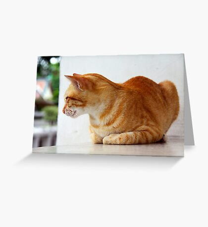 temple cat Greeting Card
