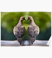 Dove birds, an image of two Mourning Doves Poster