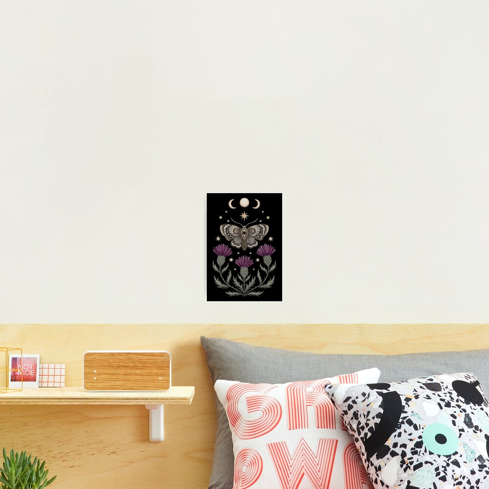 Thistle and moth Photographic Print