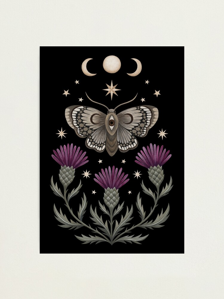 Alternate view of Thistle and moth Photographic Print