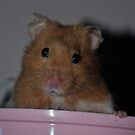 Forest the Hamster by Paul Holman