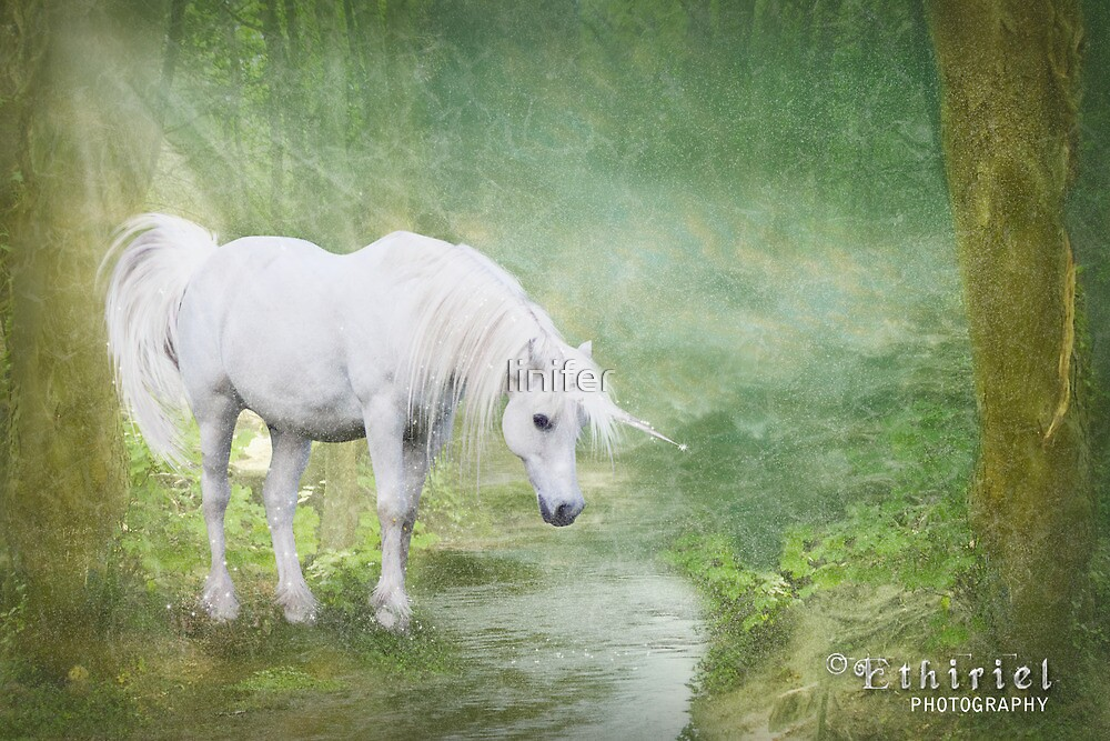 Wild Unicorn by linifer