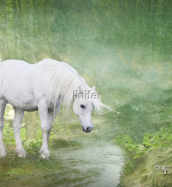 Wild Unicorn by linifer