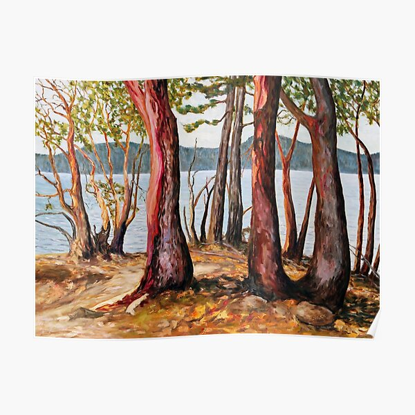 Morning With Arbutus Trees Poster