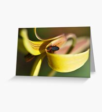 Beetle on a Yellow Star of Bethlehem Greeting Card