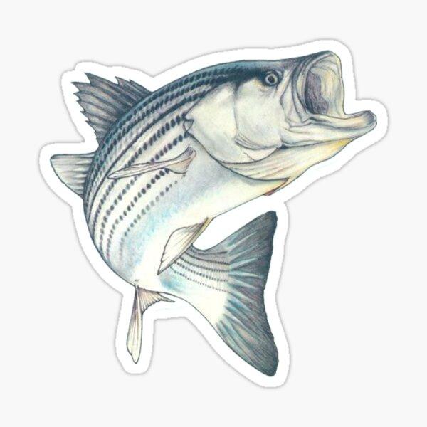Striped Bass Fishing Sticker