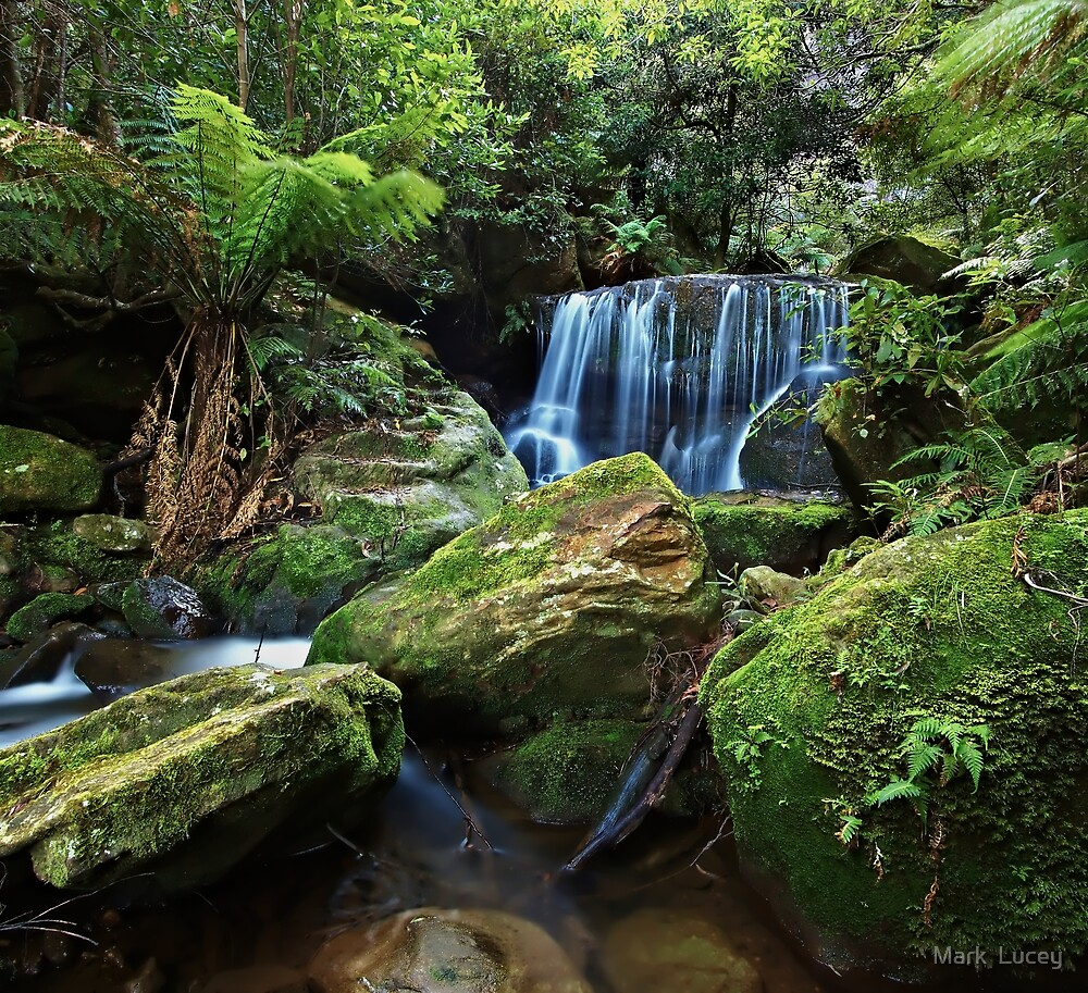 Moss on the Rock - Lurinda Falls  by Mark  Lucey