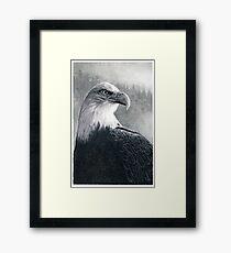 American Bald Eagle Framed Print