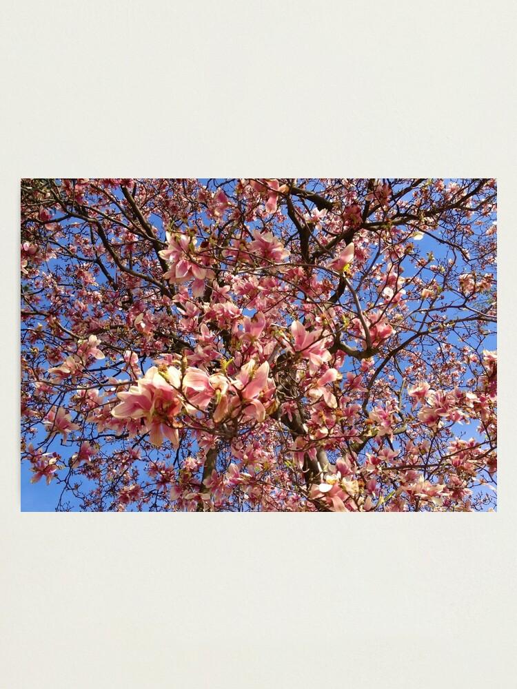 Alternate view of Spring Tree Photographic Print