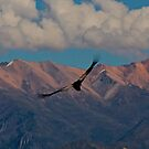 Condor - Colca Canyon by Oli Johnson