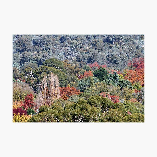 Autumn in Canberra  Photographic Print