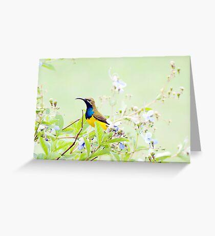 Daddy Sunbird  Greeting Card