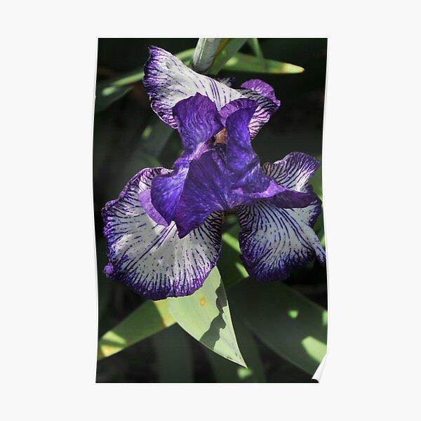Auvers Iris A Poster