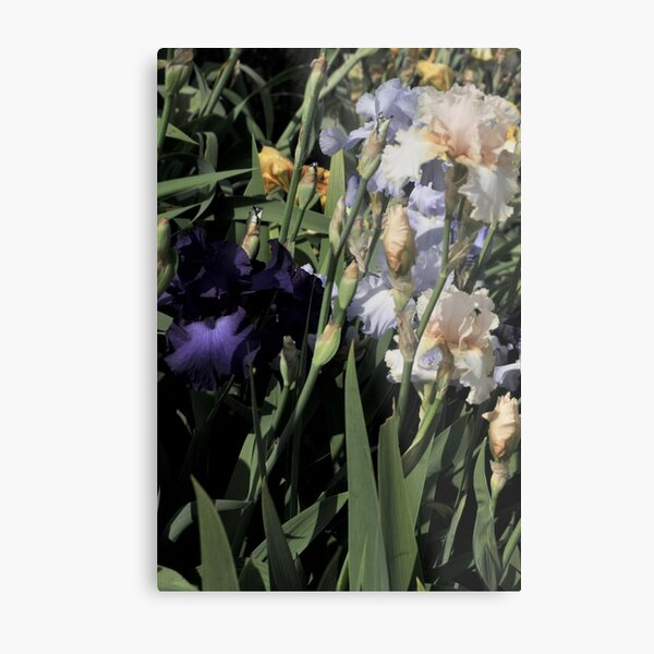 Auvers Iris D Metal Print