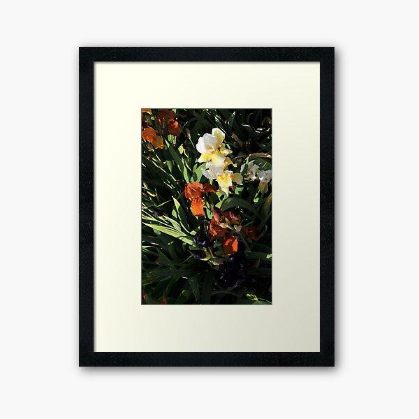 Auvers Iris H Framed Art Print