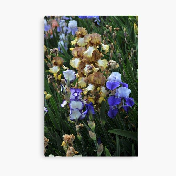 Auvers Iris I Canvas Print
