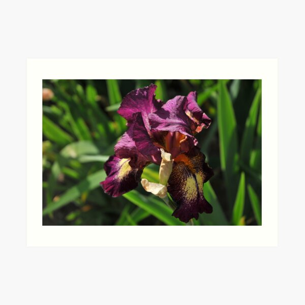 Auvers Iris N Art Print