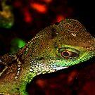 Little lizard by loiteke