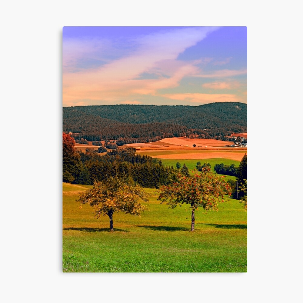 Two rival trees Canvas Print