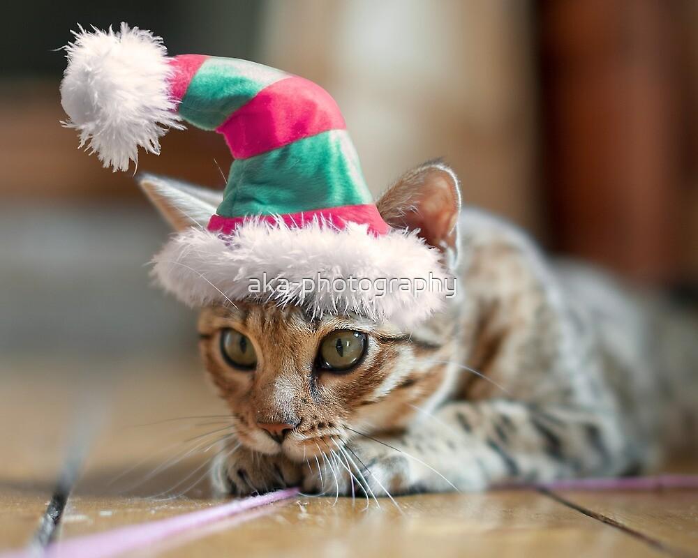 Santa kitty by aka-photography