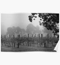 Misty Vineyard Poster