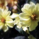 Hush by Lozzar Flowers & Art