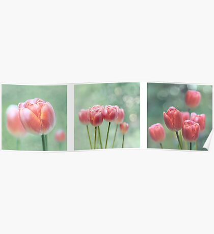 Tulip Collage Poster