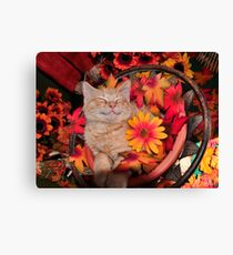 Good Morning Smile ~ Cute Kitty Cat Kitten in Fall Colors taking a Nap Canvas Print
