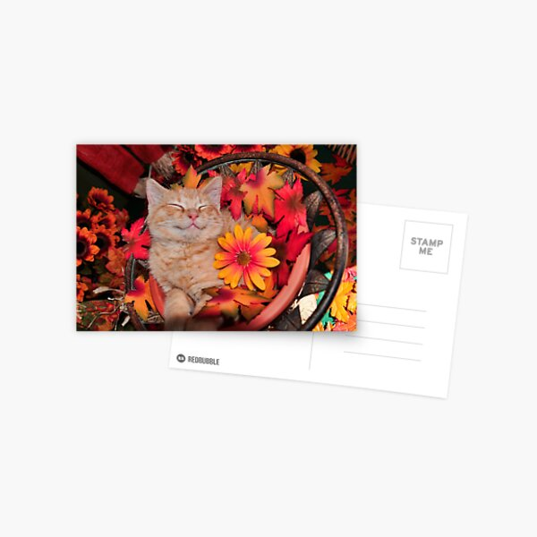 Good Morning Smile ~ Cute Kitty Cat Kitten in Fall Colors taking a Nap Postcard