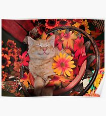 Good Morning Smile ~ Cute Kitty Cat Kitten in Fall Colors taking a Nap Poster