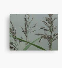 Getting back down to nature - grass seeds Canvas Print