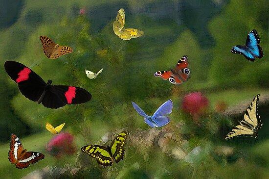Butterfly joy by Dulcina