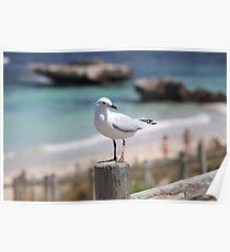 Marmion Marine Park Seabird Poster
