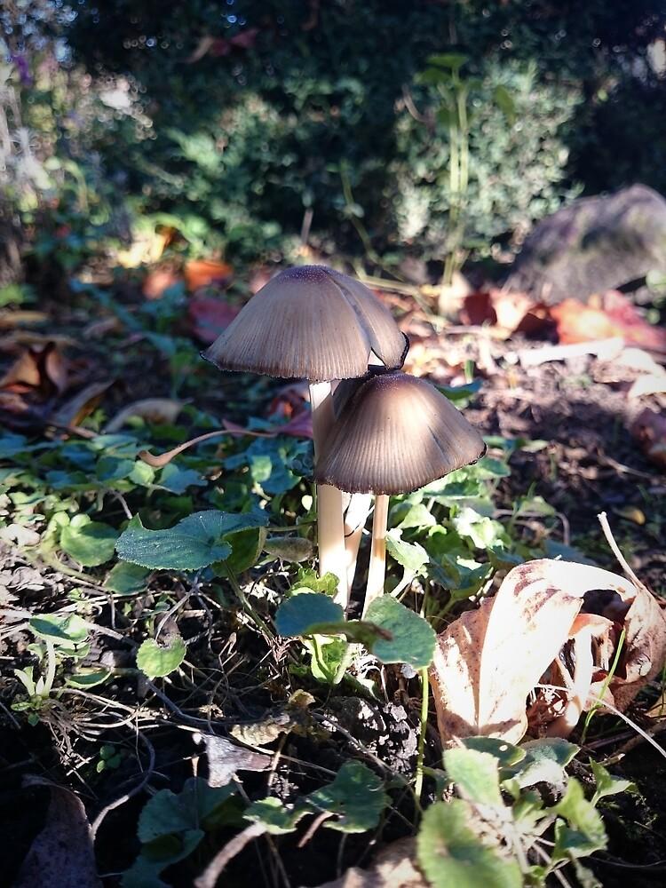 Kleiner Pilz im Garten von Gourmetkater